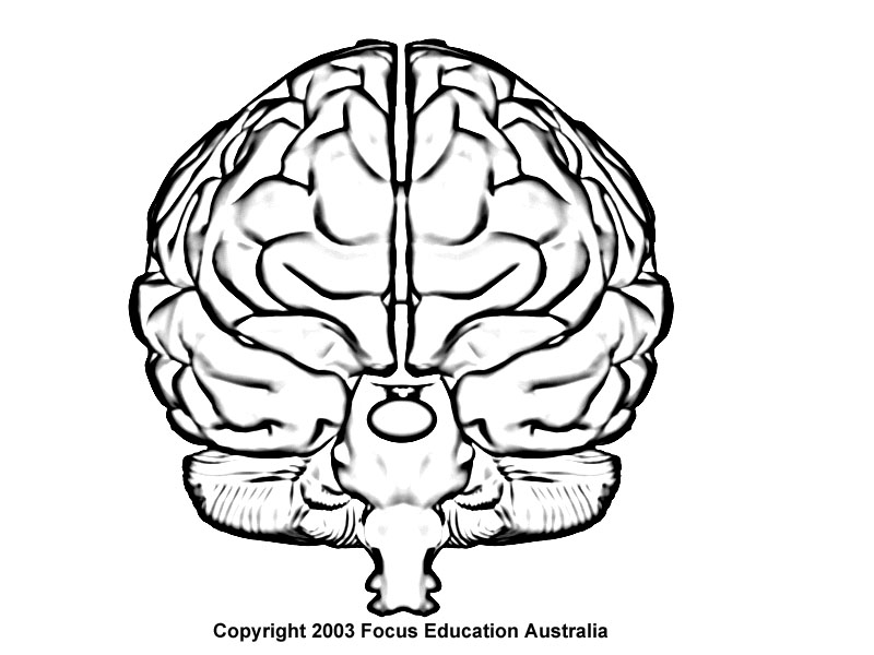 Brain frontal view clipart black and white svg library download Brain Outline Drawing | Free download best Brain Outline Drawing on ... svg library download