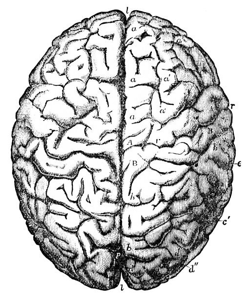 Brain frontal view clipart black and white clipart royalty free stock Free Brain Drawing Cliparts, Download Free Clip Art, Free Clip Art ... clipart royalty free stock