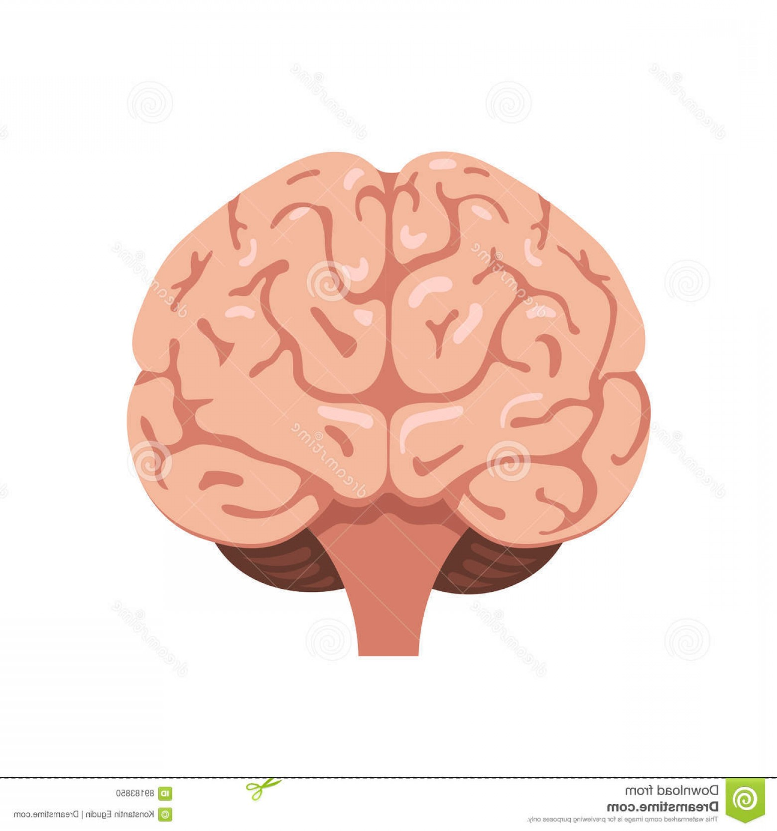 Brain frontal view clipart black and white graphic stock Brains Front View Icon Vector | HandandBeak graphic stock