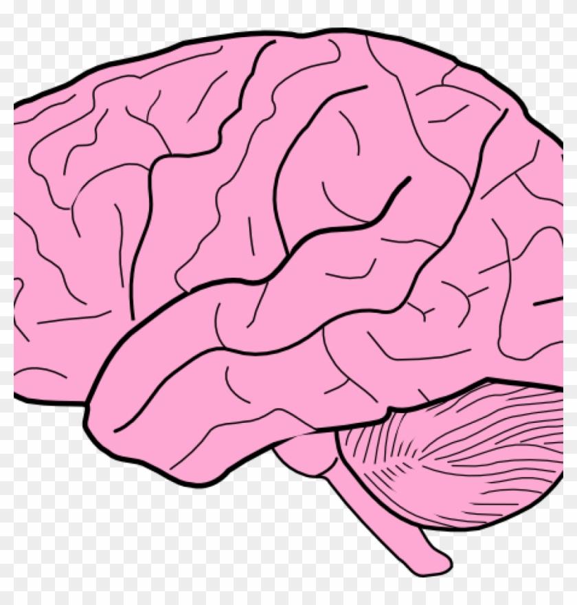 Brain image clipart clipart library Brain Clipart Brain Clip Art At Clker Vector Clip Art - Blank Brain ... clipart library
