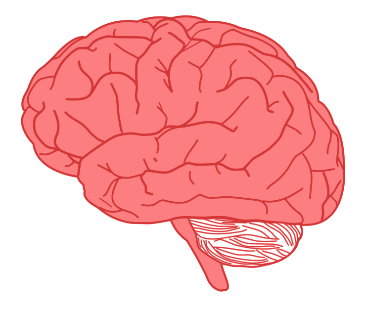 Brain image clipart stock Free Cute Brain Cliparts, Download Free Clip Art, Free Clip Art on ... stock