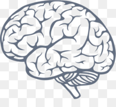 Brain images free clipart picture free stock Download Free png Brain PNG & Brain Transparent Clipart Free ... picture free stock