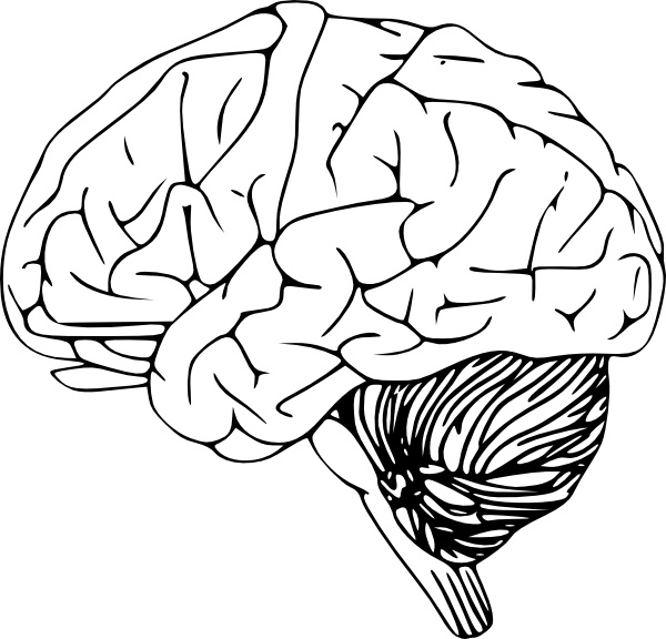Brain images free clipart freeuse download Free Brain Clip Art, Download Free Clip Art, Free Clip Art on ... freeuse download