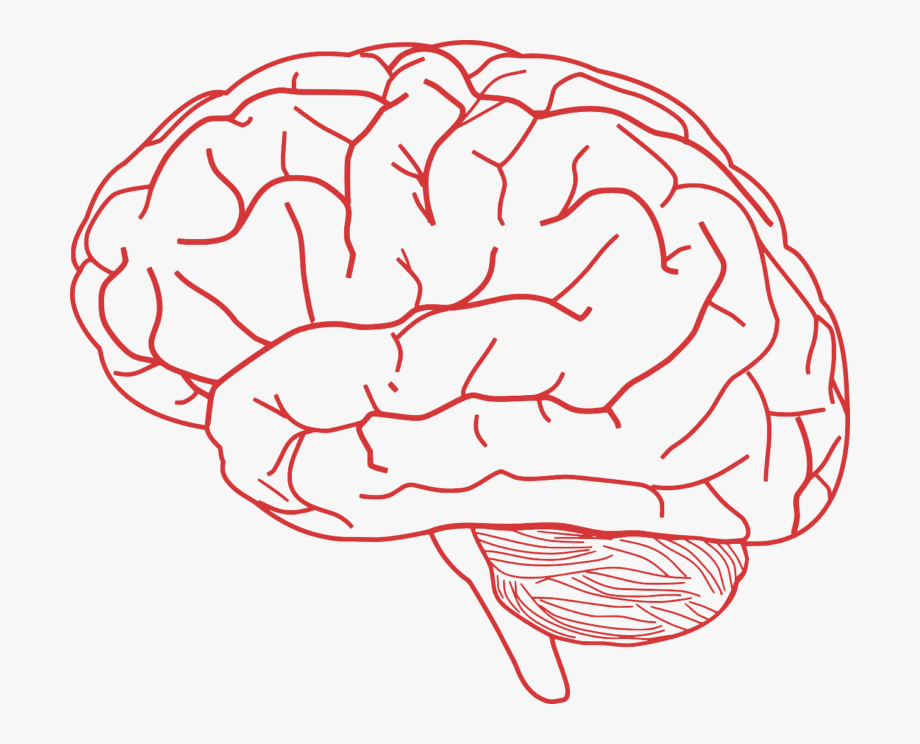 Brain images free clipart picture free download Brain Clip Art #1531925 - Free Cliparts on ClipartWiki picture free download