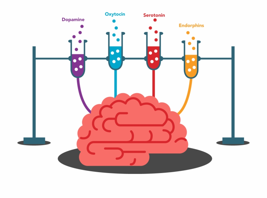 Brain memory clipart banner free stock Brain Memory Clipart - Endorphin Brain Png Transparent, Transparent ... banner free stock