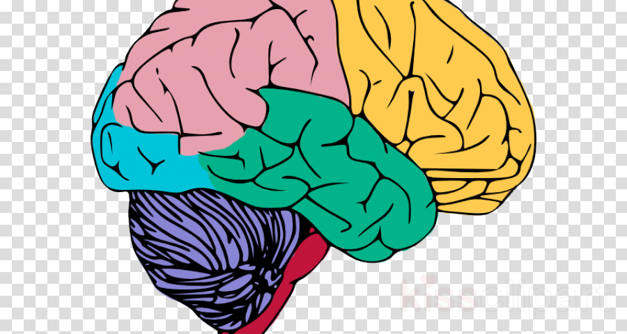 Brain muscle clipart royalty free stock Brain Clipart clipart - Brain, Muscle, Human, transparent clip art royalty free stock