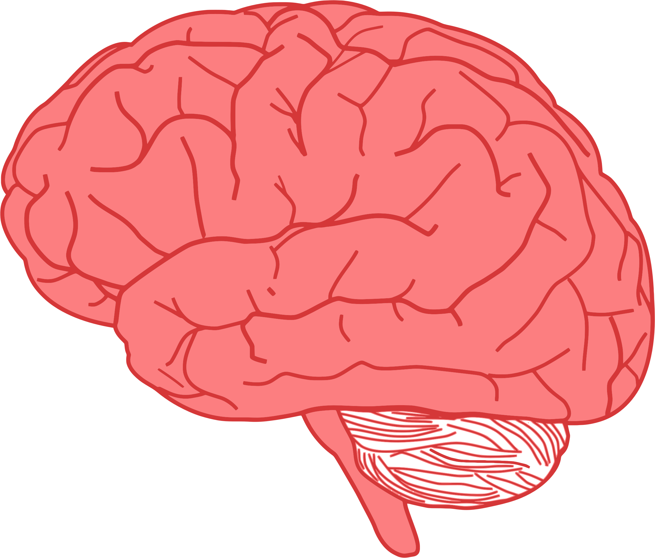 Brain muscle clipart banner black and white stock Mind Clipart Muscle - Brain Clipart , Transparent Cartoon - Jing.fm banner black and white stock