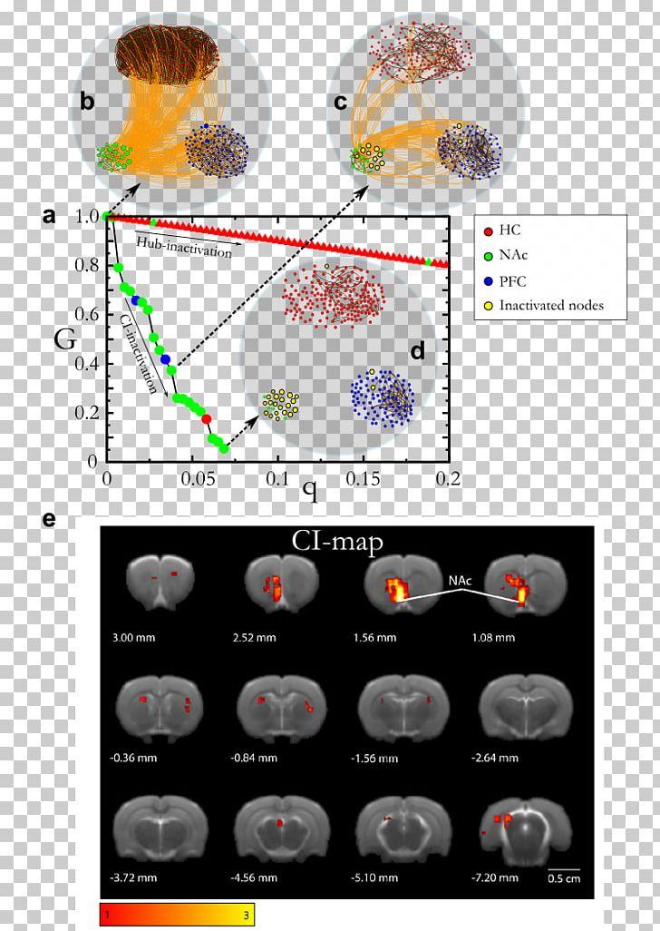 Brain nodes clipart image library stock Computer Science Flowchart Algorithm Information PNG, Clipart ... image library stock