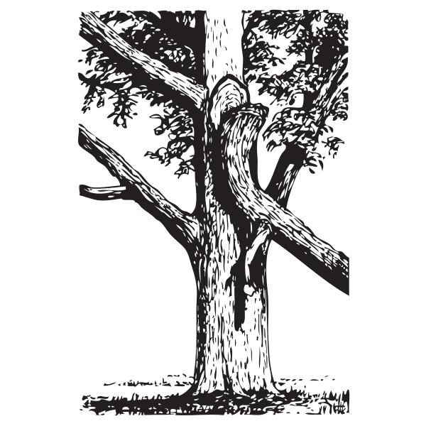 Branch broken clipart