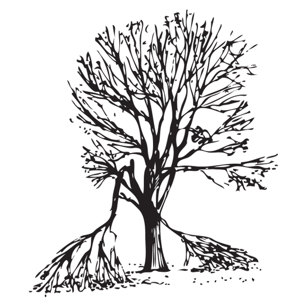 Branch broken clipart banner free stock Storm Recovery - The Arbor Day Foundation banner free stock