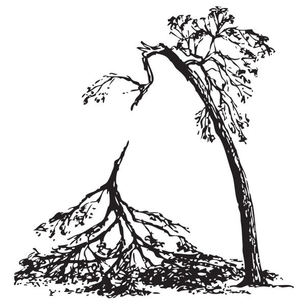 Branch broken clipart svg royalty free library Storm Recovery - The Arbor Day Foundation svg royalty free library