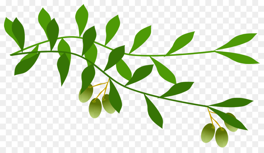Branch clipart free graphic freeuse Leaf Tree Transparent Png Image Clipart Free Download Alive Olive ... graphic freeuse