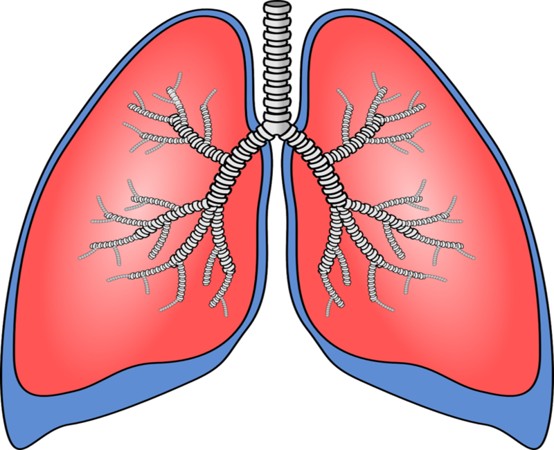 Breathing lungs clipart freeuse library Breath Diagnostics and Mayo Clinic partner on new lung cancer test freeuse library
