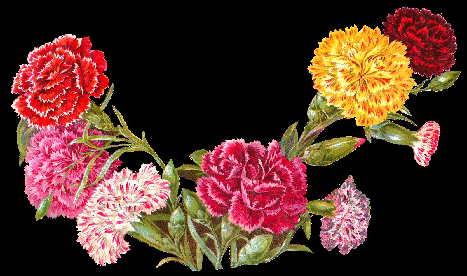 Bright flower border clipart banner transparent download Antique Images: Old Botanical Art Carnation Illustration Digital ... banner transparent download