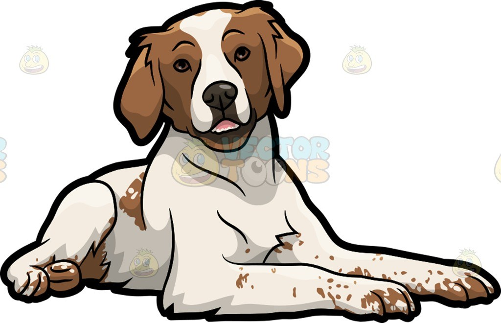 Brittany clipart jpg royalty free A cute Brittany Spaniel pet dog » Clipart Portal jpg royalty free