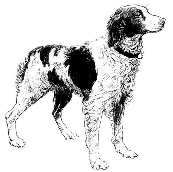 Brittany clipart jpg free Brittany Spaniel BW - /animals/dogs/B/Brittany_Spaniel_BW.png.html jpg free