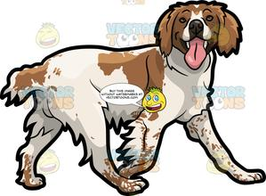 Brittany dog clipart vector free A Shaggy Brittany Spaniel Pet Dog vector free