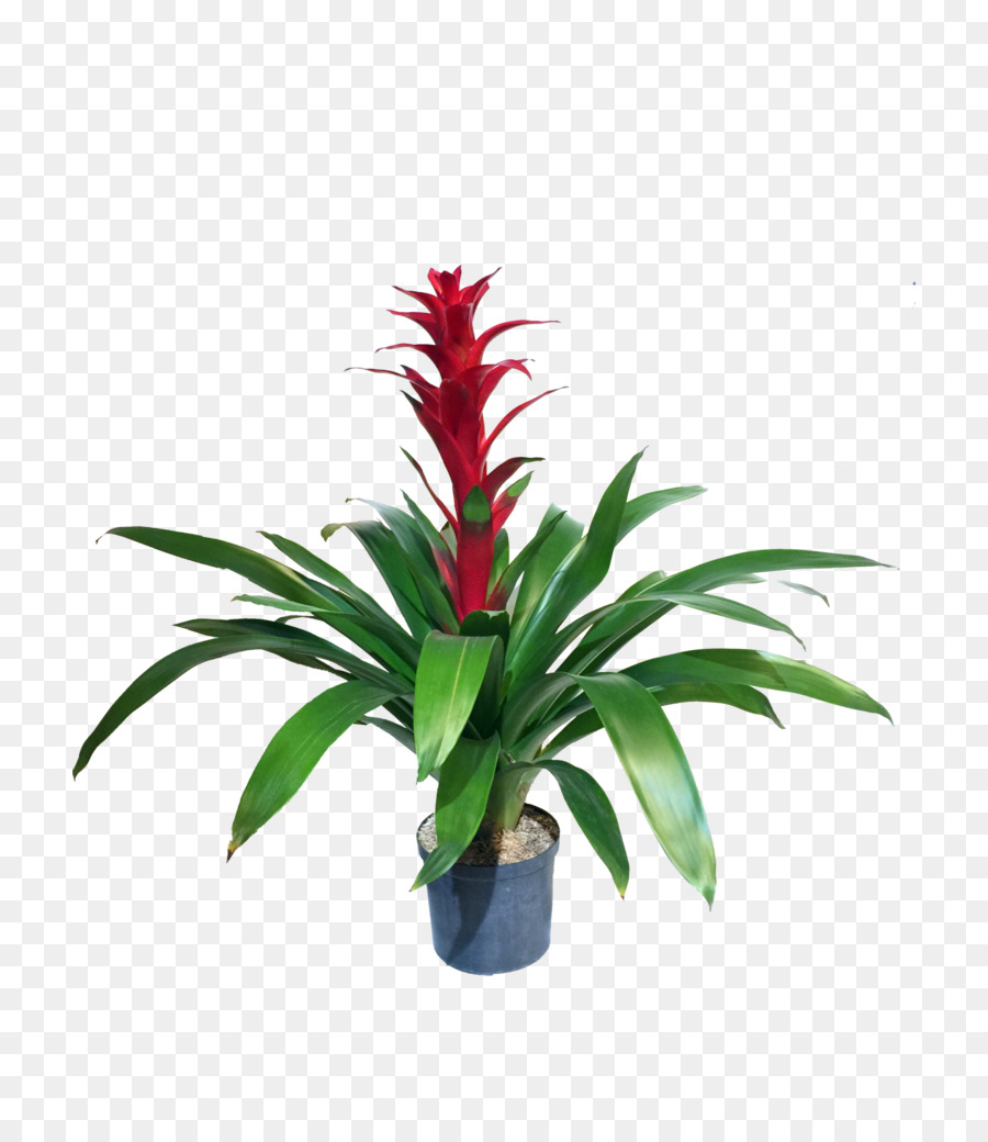 Bromelia clipart banner transparent library Flowers Clipart Background png download - 768*1024 - Free ... banner transparent library