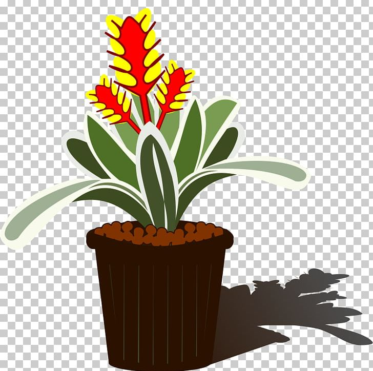 Bromelia clipart clipart library download Bromelia Aechmea Chantinii Tillandsia PNG, Clipart, Aechmea, Aechmea ... clipart library download