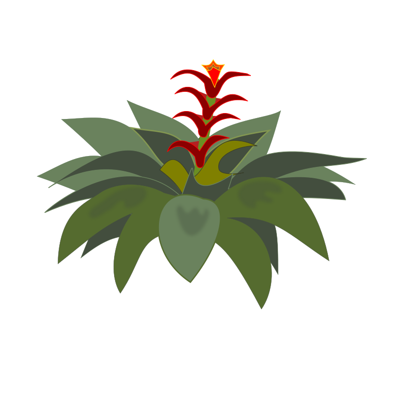 Bromelia clipart png free stock Free Clipart: Bromelia-01 | jpenrici png free stock