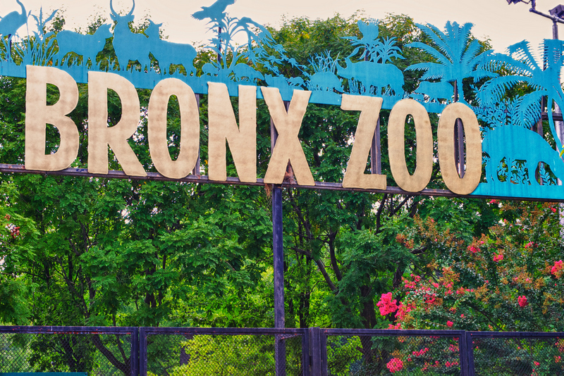 Bronx zoo clipart image royalty free stock Bronx Zoo - The International Preschools of NYC image royalty free stock