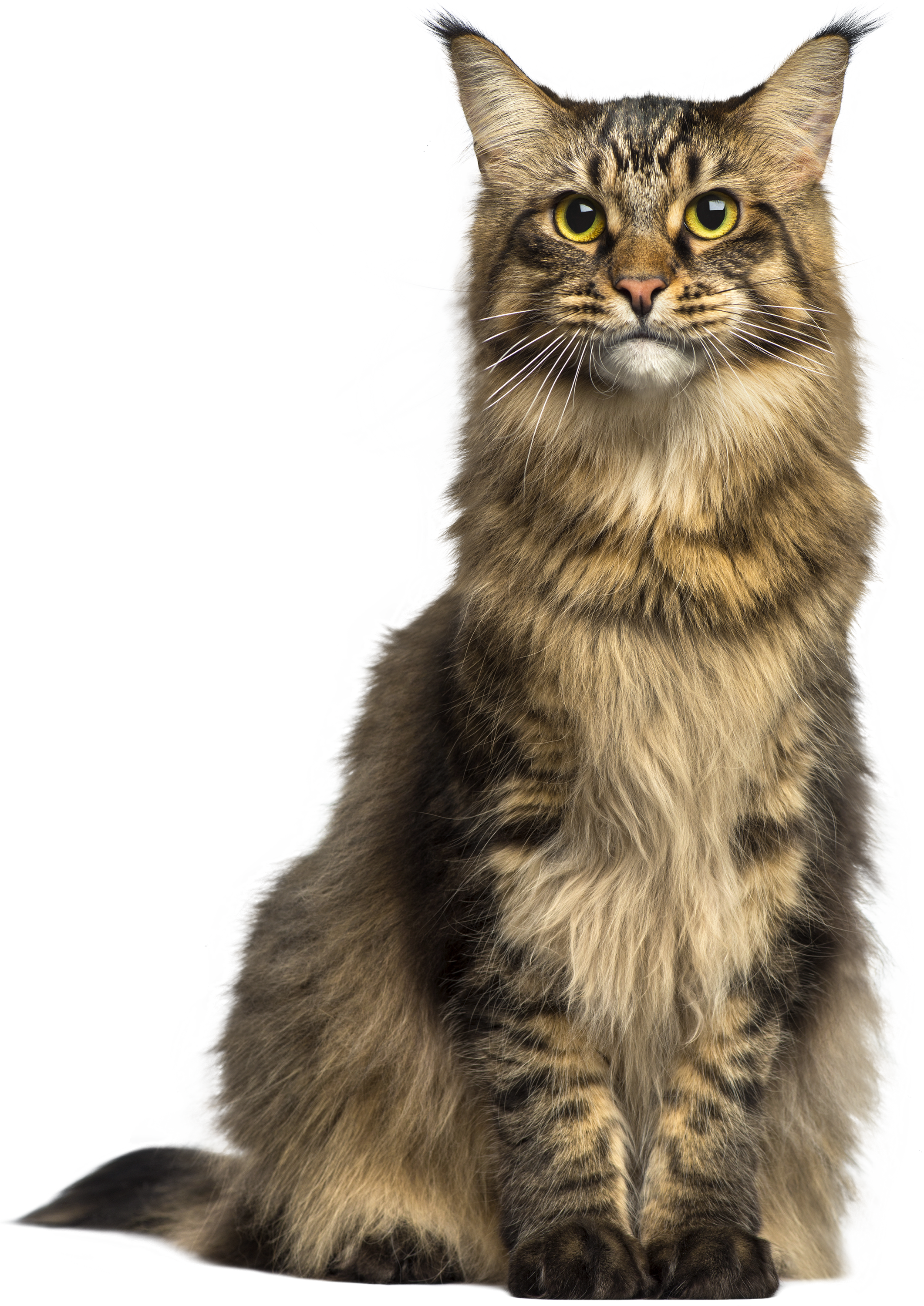 Brown cat clipart picture transparent Cat PNG Clip Art - Best WEB Clipart picture transparent