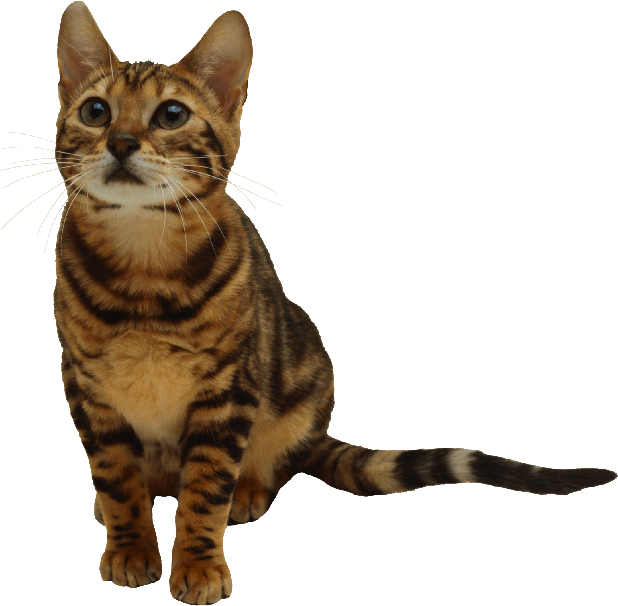 Brown cat clipart picture royalty free library 25 Kitten Png Image Download Picture picture royalty free library