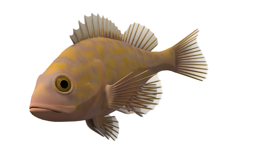 Fish tank clipart no background clip royalty free Fishing Transparent PNG Pictures - Free Icons and PNG Backgrounds clip royalty free