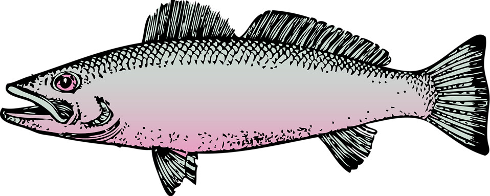 Fish clipart no background graphic download Fish | Free Stock Photo | Illustration of a fish | # 10803 graphic download