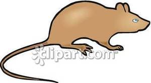 Brown rat clipart royalty free library Small Brown Rat Silhouette - Royalty Free Clipart Picture royalty free library