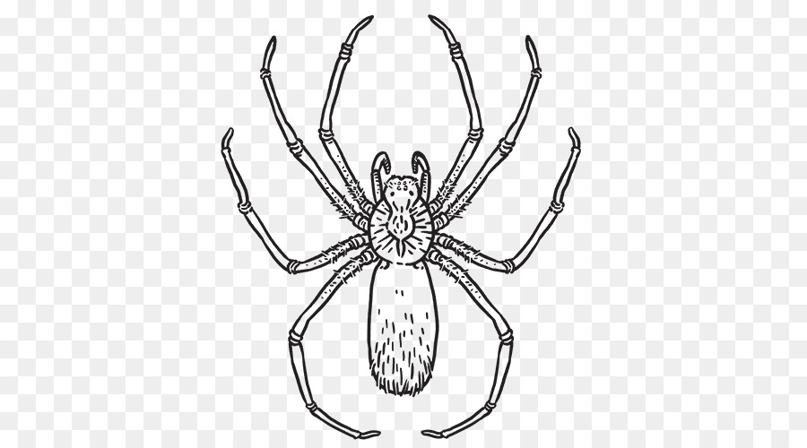 Brown recluse spider clipart black and white banner black and white download Brown recluse spider Drawing Clip art Line art - spider drawing png ... banner black and white download