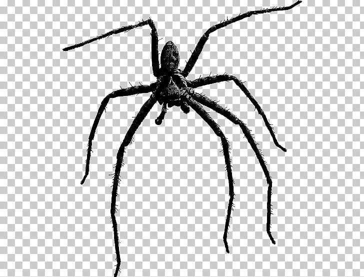 Brown recluse spider clipart black and white jpg free Brown Recluse Spider Portable Network Graphics Spider Bite PNG ... jpg free
