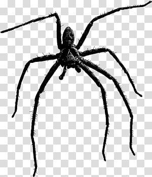 Brown recluse spider clipart black and white clip Spider bite Brown widow Southern black widow Brown recluse spider ... clip