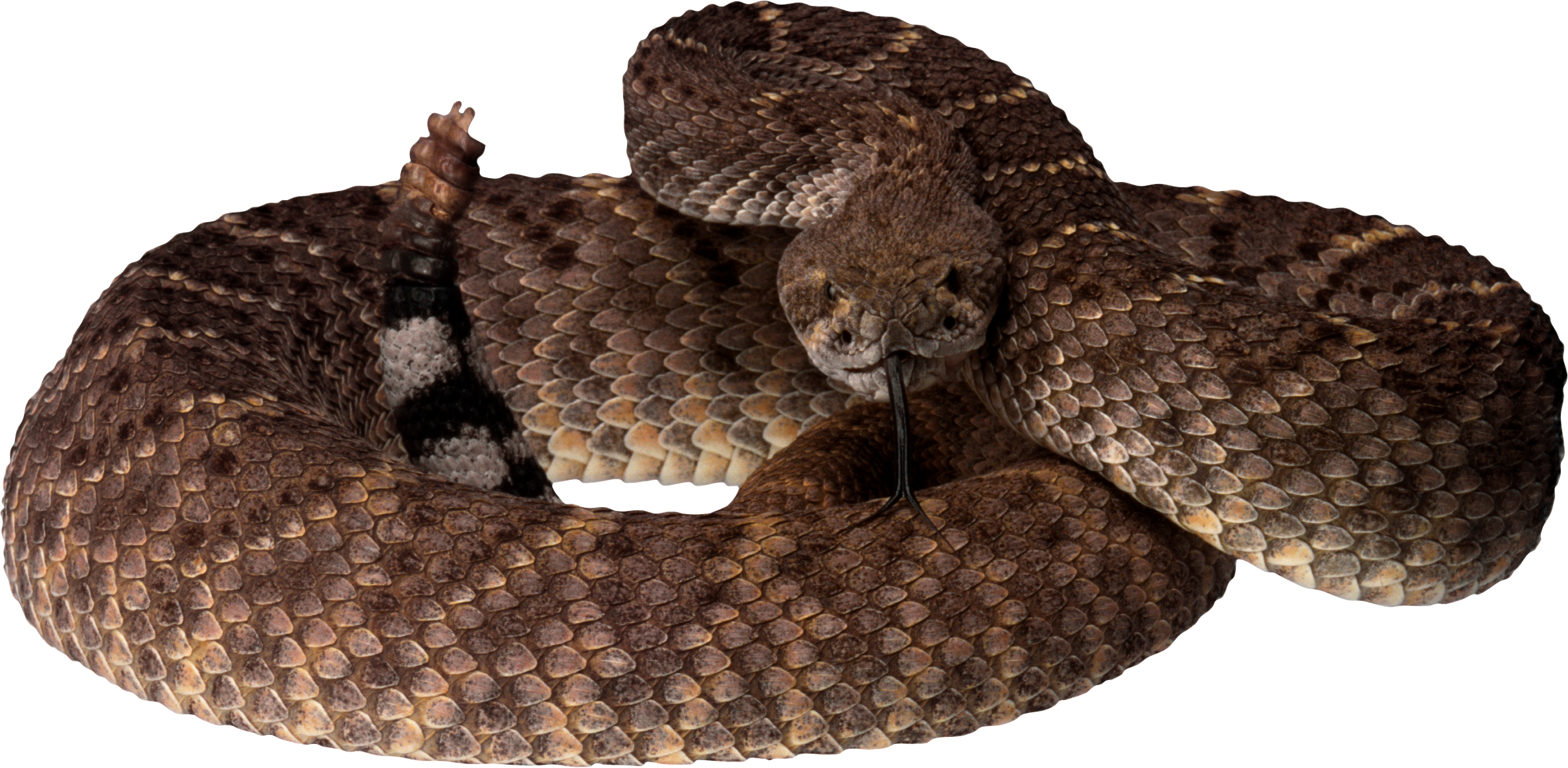 Brown tree snake clipart banner royalty free library Snake PNG | Animal PNG | Pinterest | Snake and Animal banner royalty free library