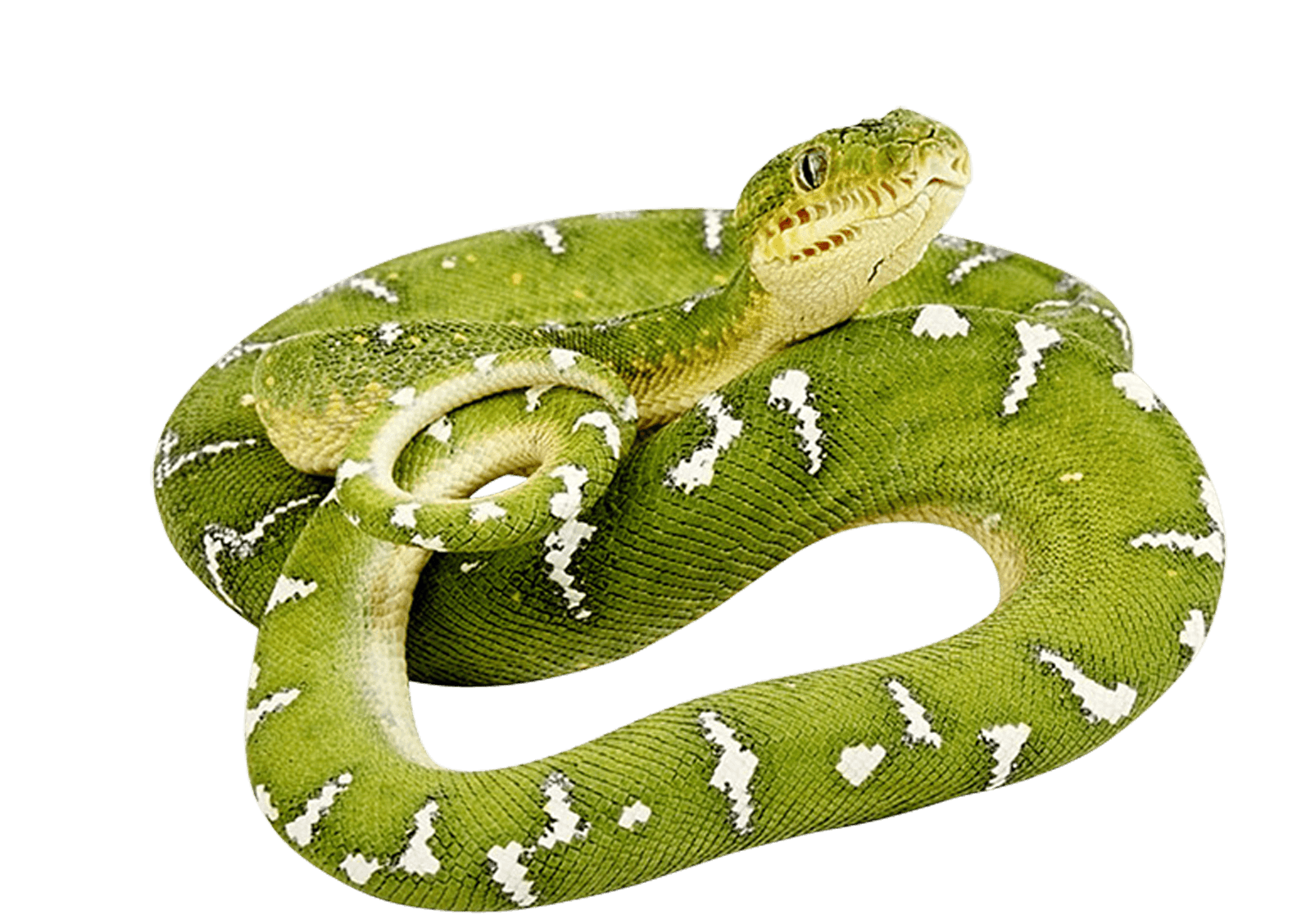 Brown tree snake clipart image stock Green Snake Png Image PNG Image | Zvířata | Pinterest | Snake ... image stock