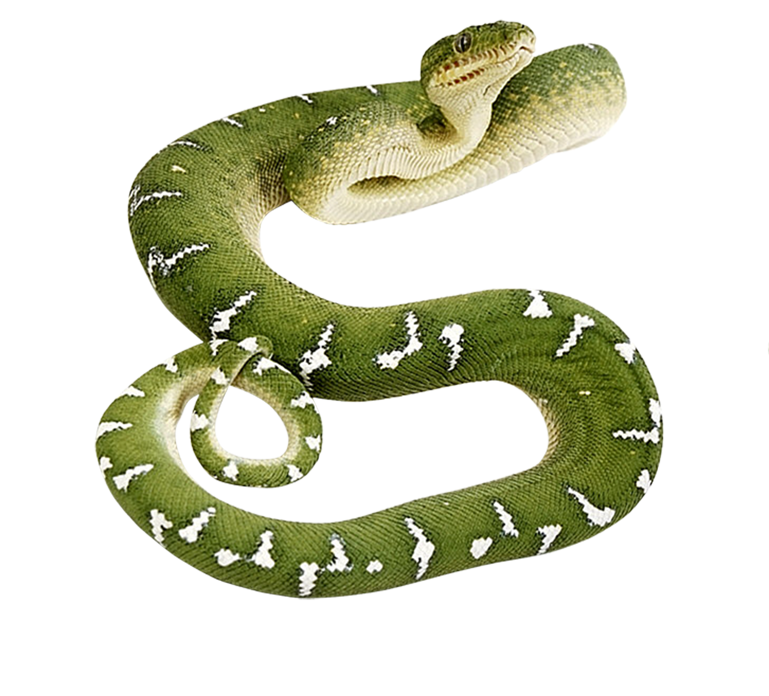 Brown tree snake clipart clipart transparent stock Green snake PNG | Animal PNG | Pinterest | Snake and Animal clipart transparent stock