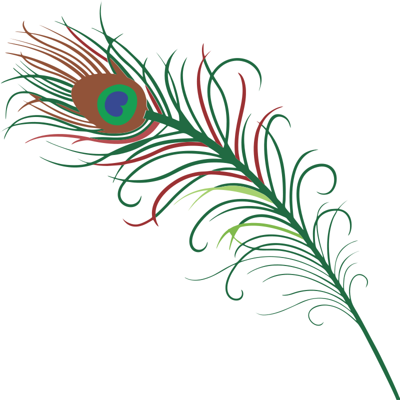 Designed turkey feathers clipart download Peacock Feather Clipart at GetDrawings.com | Free for personal use ... download