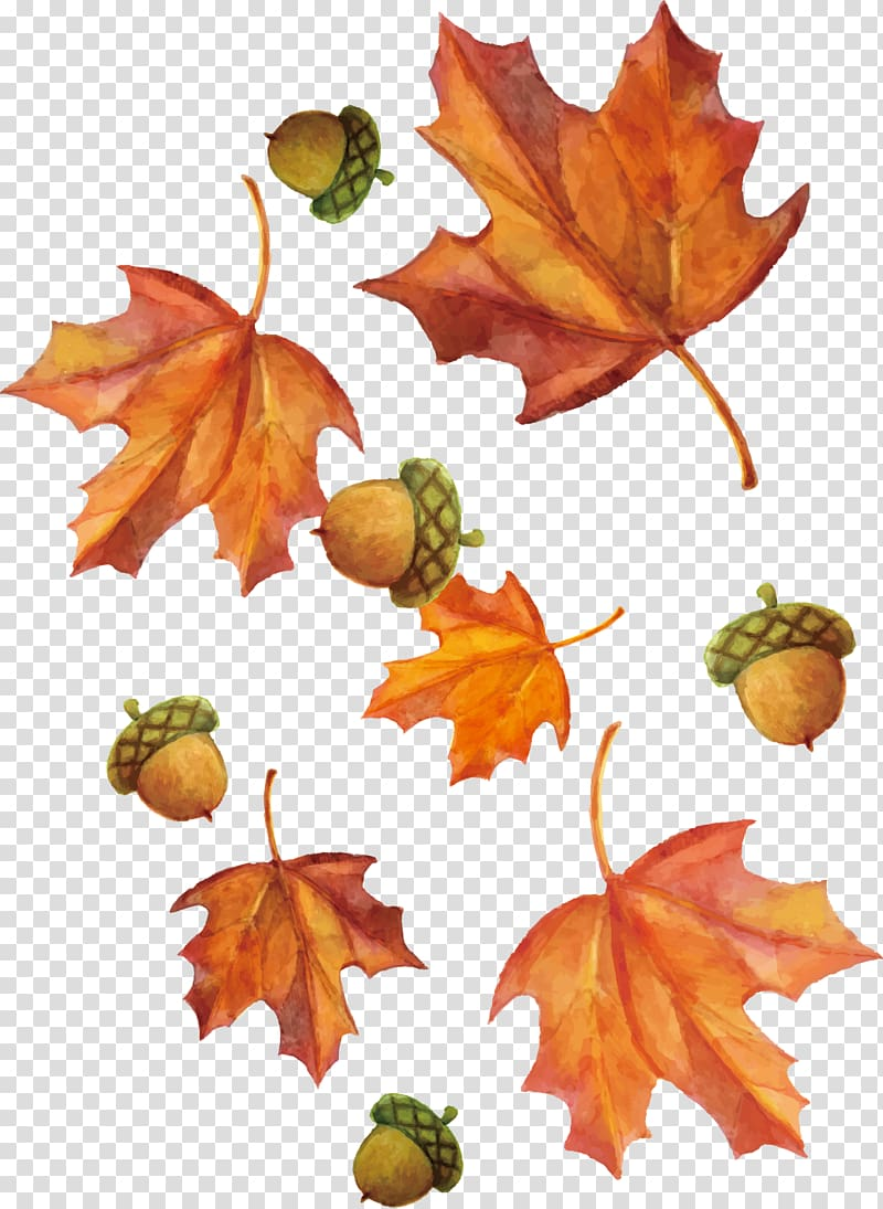 Brown yellow berries fall branch png clipart royalty free stock Brown maple leaf pattern, hand-painted watercolor maple leaf and ... royalty free stock