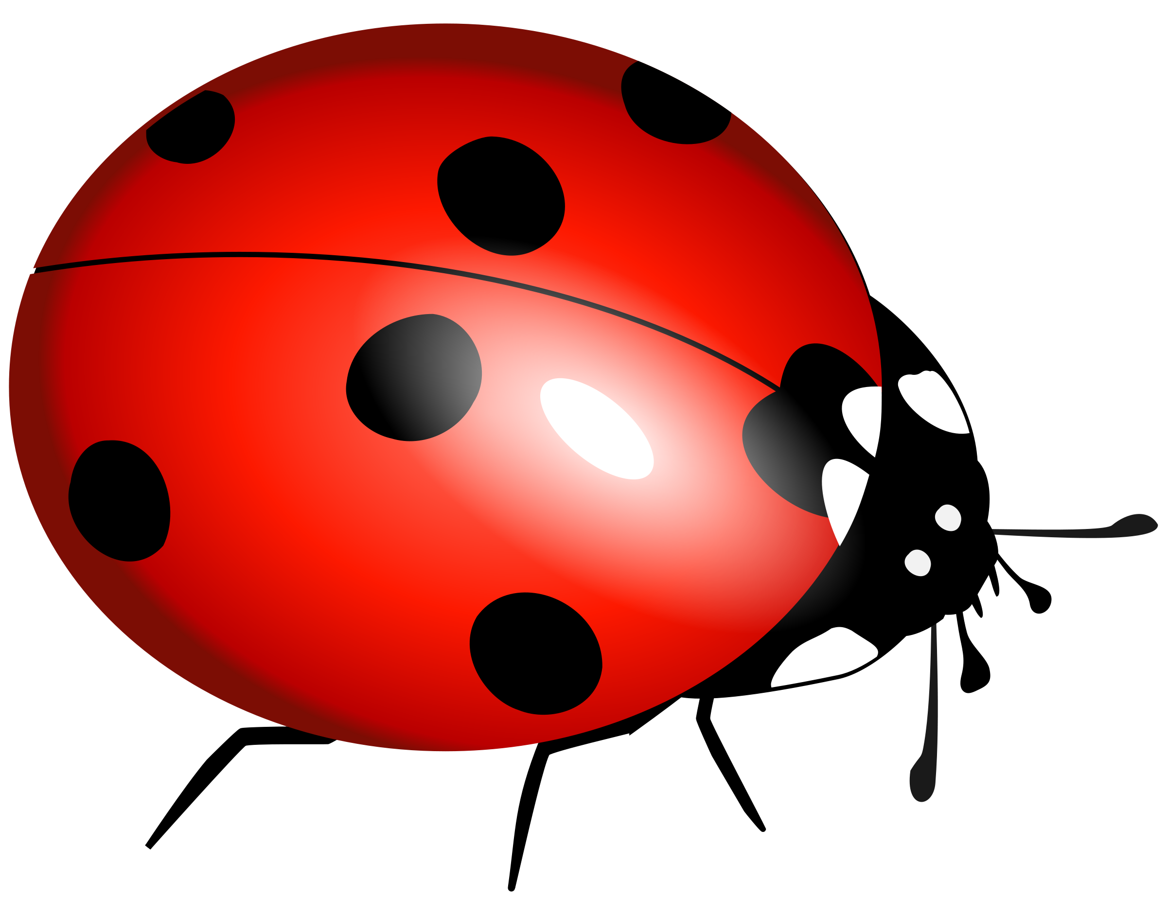 Ladybug on a flower clipart free image black and white Download lady bug clipart | ClipartMonk - Free Clip Art Images image black and white