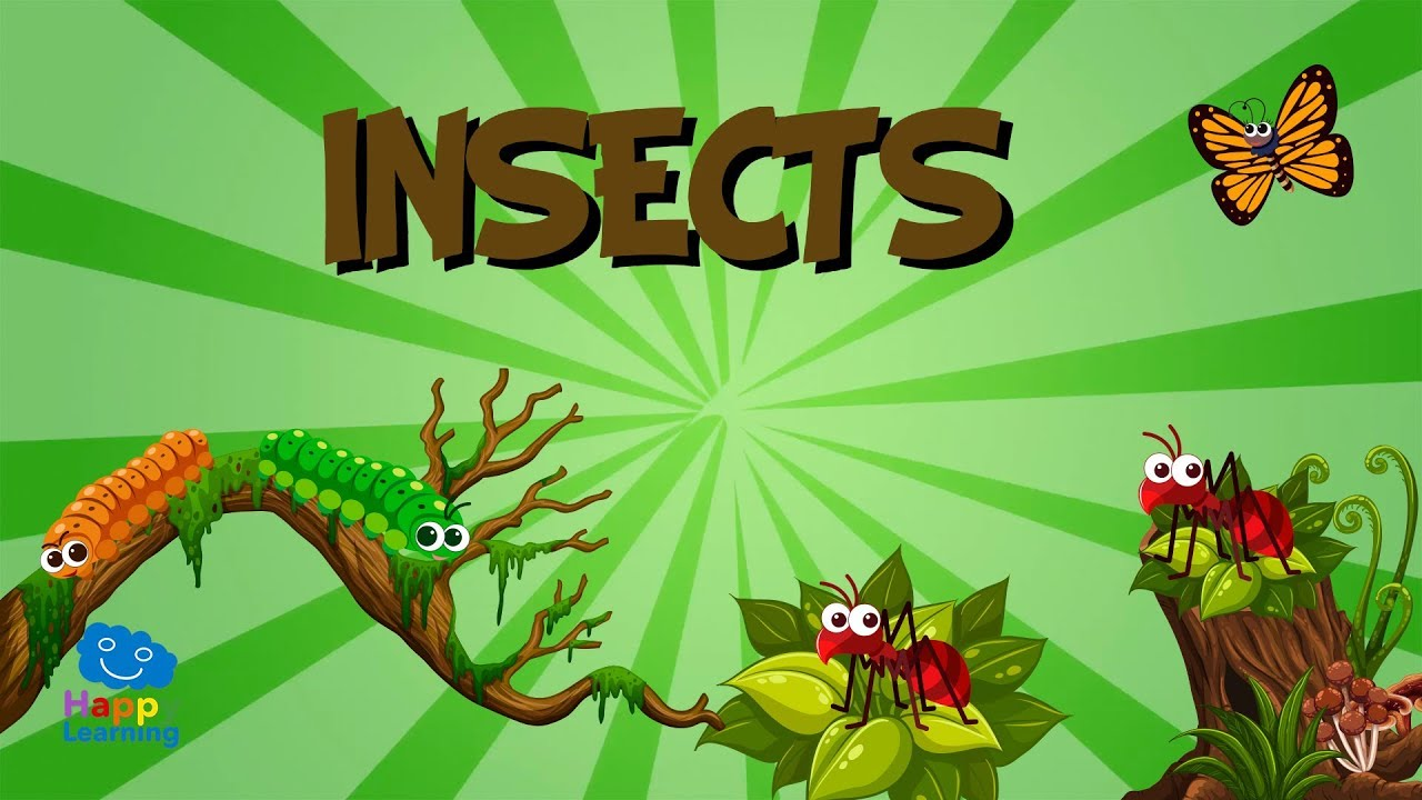 Bugs group clipart free stock Insects | Educational Videos for Kids free stock