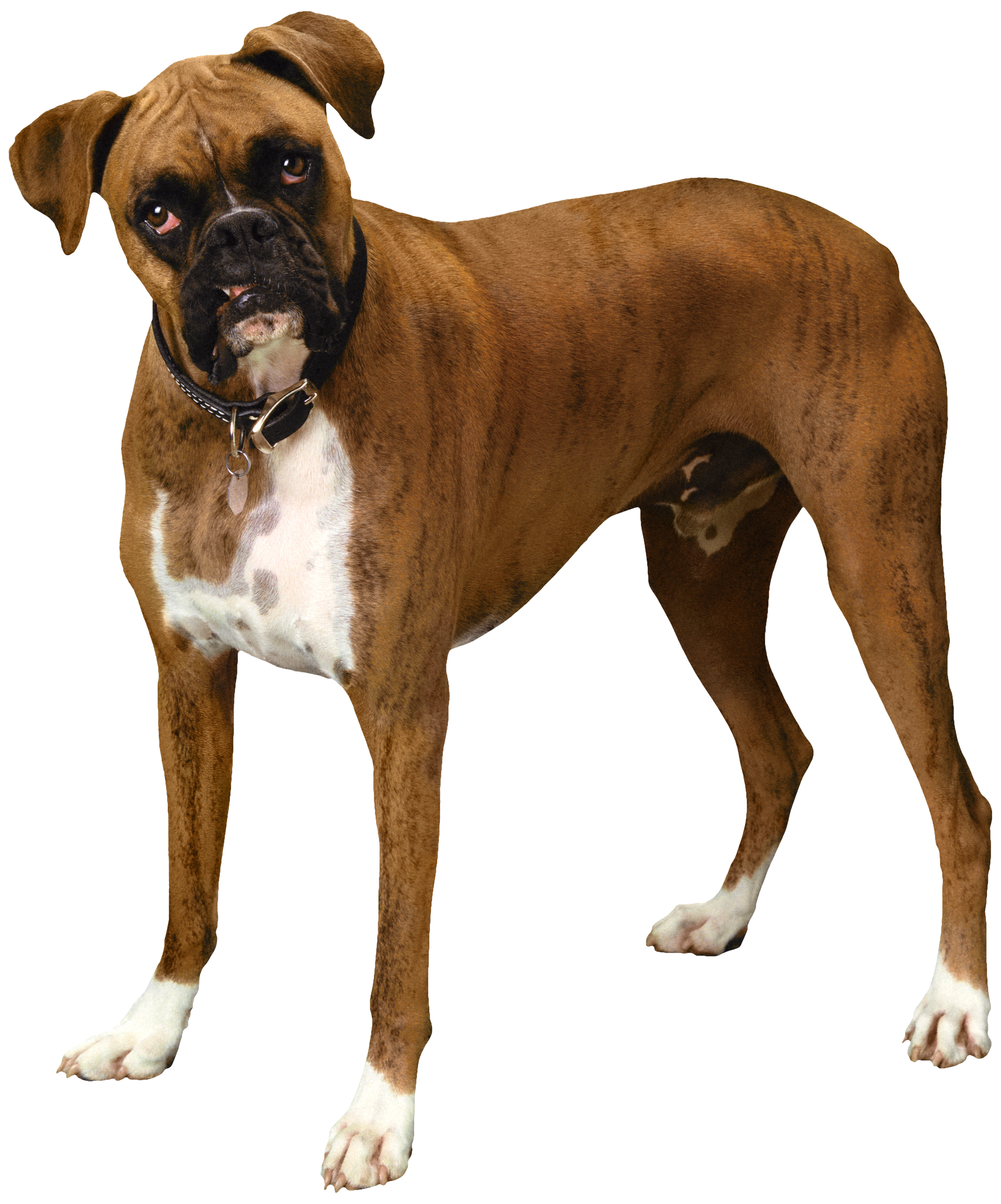 Light brown dog clipart svg freeuse library Brown Bulldog PNG Clipart - Best WEB Clipart svg freeuse library