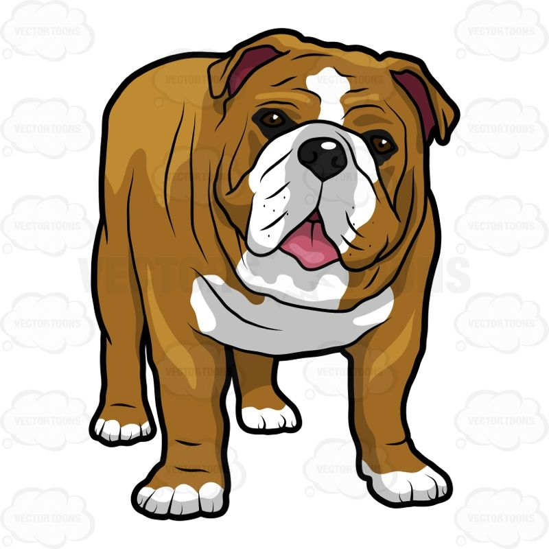Bulldog standing clipart jpg black and white stock English Bulldog Standing With Its Mouth Open #allfours #animal ... jpg black and white stock