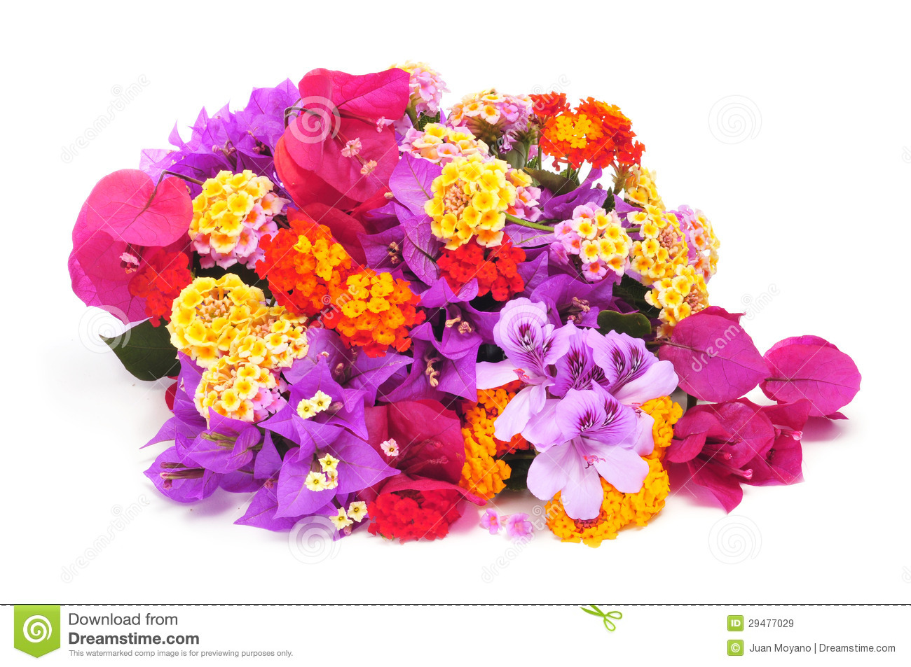 Bunch of flowers images download. Different royalty free stock