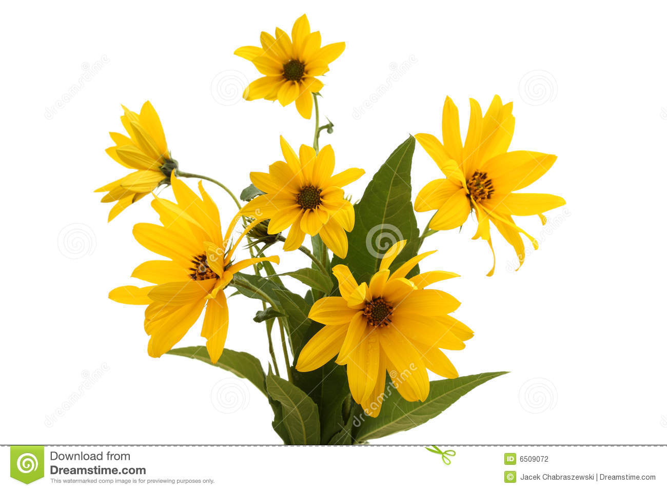 Bunch of flowers images download jpg royalty free stock Bunch Of Flowers Stock Photography - Image: 6509072 jpg royalty free stock