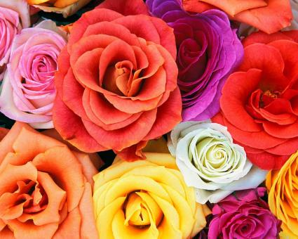 Bunch of flowers picture free. Stock photos stockvault net