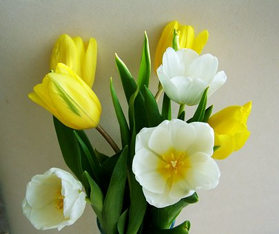 Images on pixabay tulip. Bunch of flowers picture free