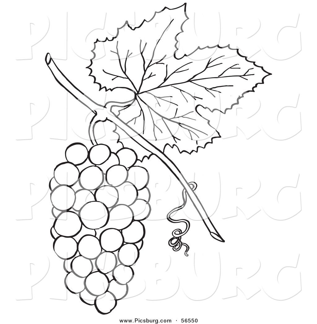 Bunch of grapes clipart black and white graphic free download grapes clipart black and white - Google Search | Lexie\'s 1st ... graphic free download