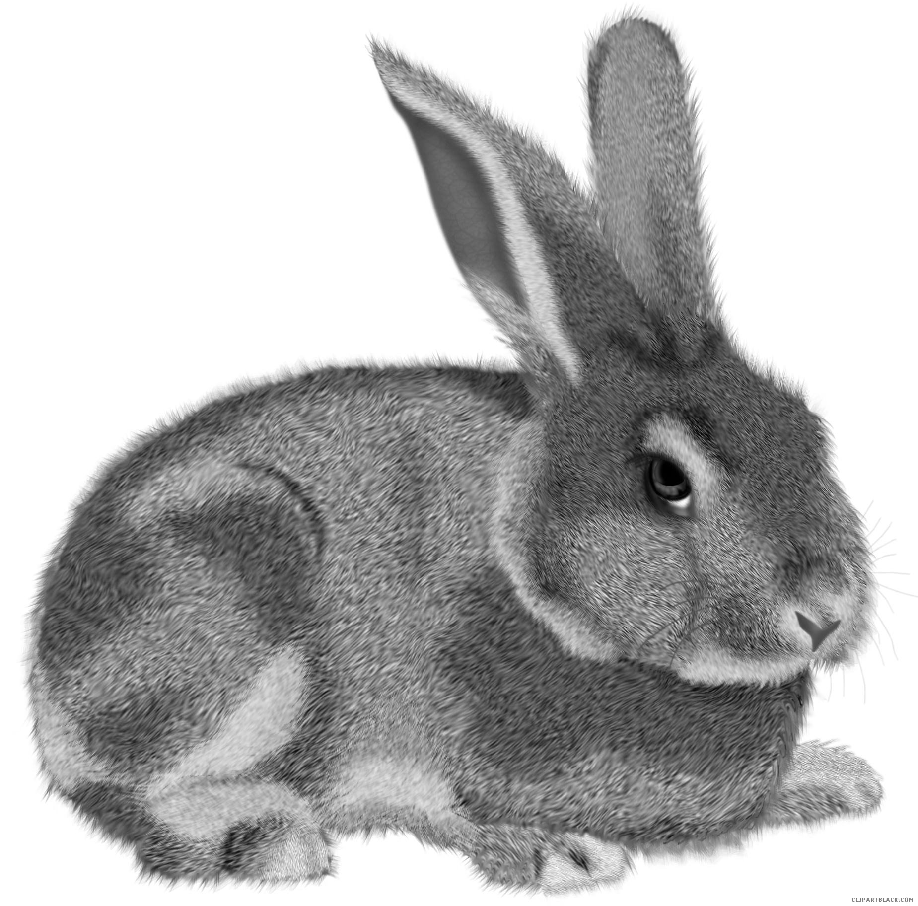 Bunny baseball clipart picture library Grey Rabbit Animal free black white clipart images clipartblack ... picture library