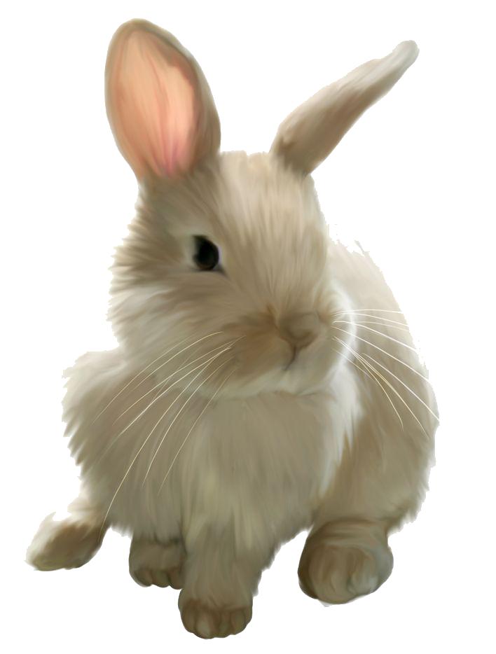 Bunny clipart no background svg stock Rabbit PNG Images Transparent Free Download | PNGMart.com svg stock