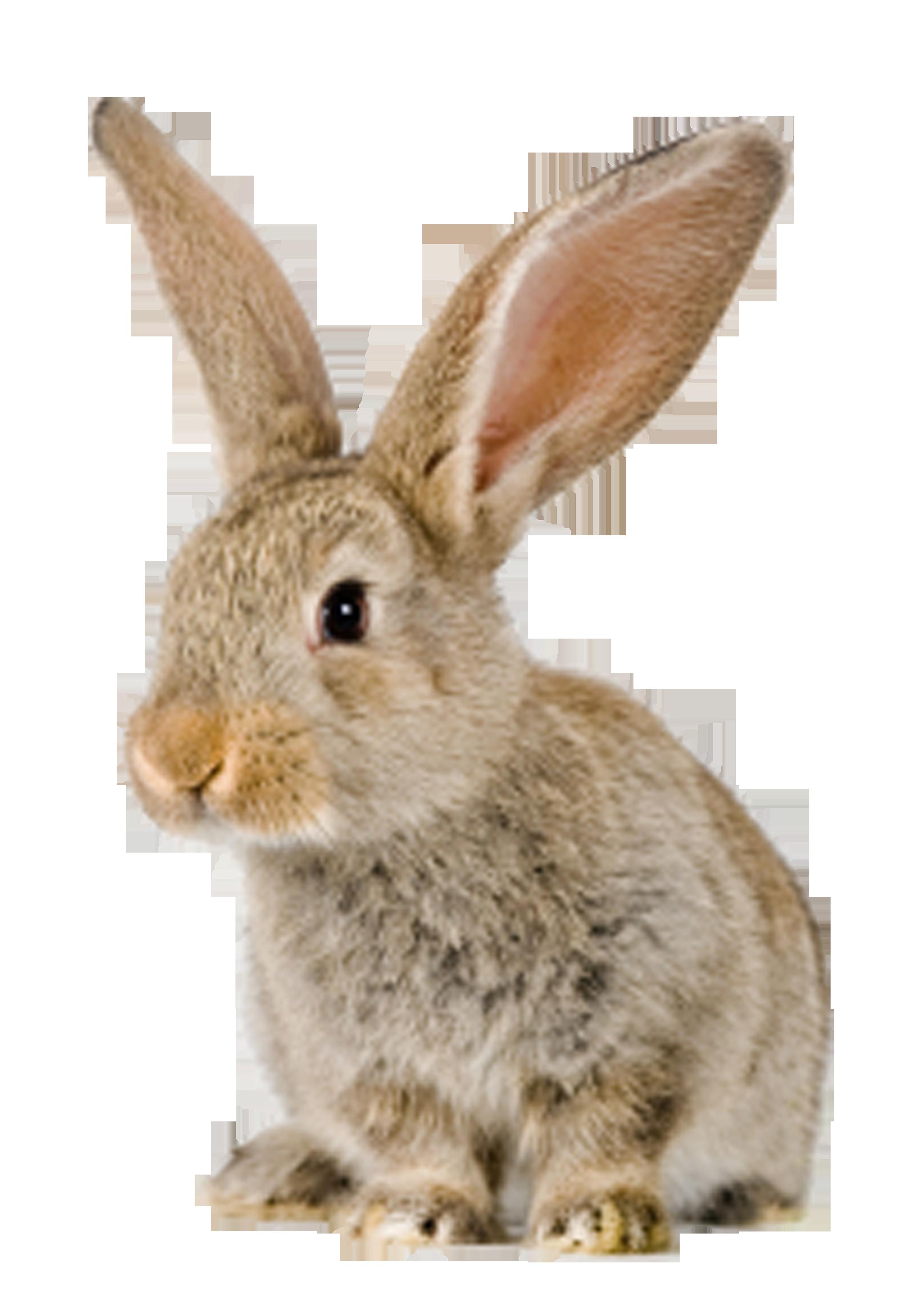Rabbit with an apple clipart clip transparent konijn | CLIPART 5 | Pinterest | Rabbit clip transparent